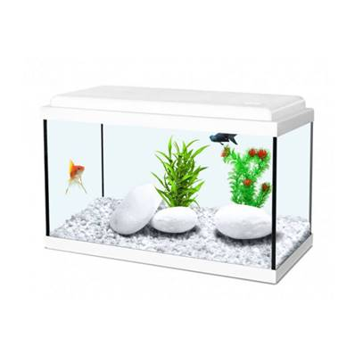 ZOLUX - Aquarium KIT NANOLIFE 40 Kidz blanc