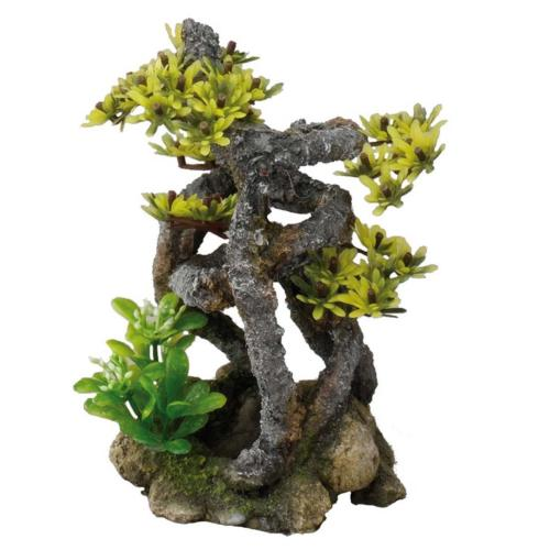EBI - Bonsai